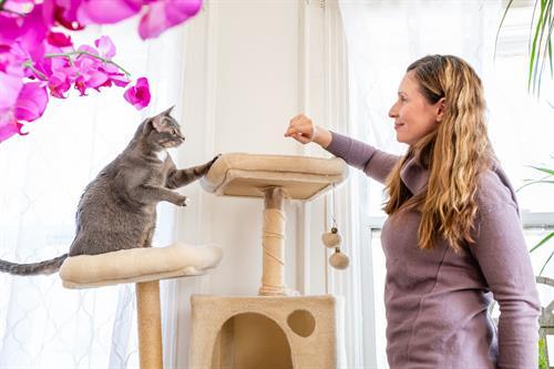 Cat enrichment.