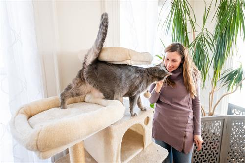TLC is our specialty as cat sitters.