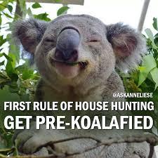 Gallery Image Get_Pre_Koalafied.jpg