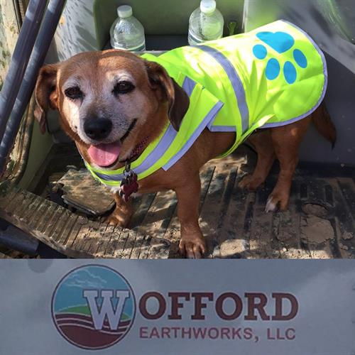 Maggie: The unofficial mascot of Wofford Earthworks, LLC!