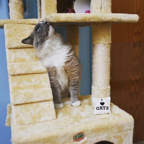 Cat Playtime