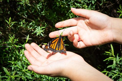 Our outdoor Commemorative Celebration, held annually, includes a butterfly release.