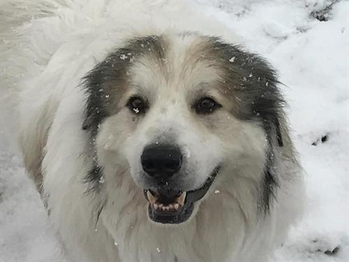 Banjo enjoying the snow