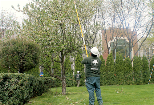 Maintenance Pruning