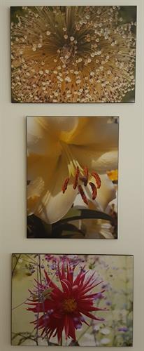 Some of Denn Santoro's Flower Series
