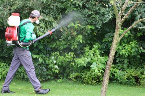 Pest Control | Woodbury, MN | Green Oasis