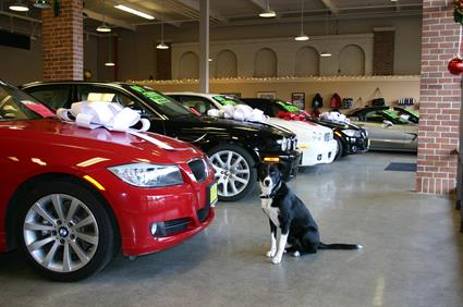 Tux at Diablo Motors Showroom