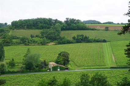 Saint-Émilion Vineyards
