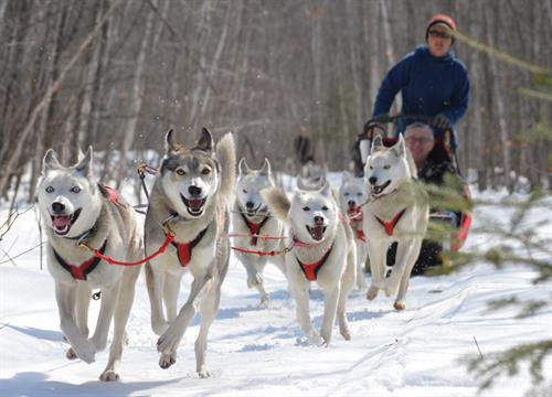 Wolfsong Adventures in Mushing - call us to book trips!