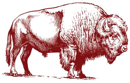 Bison Insurance, PLLC