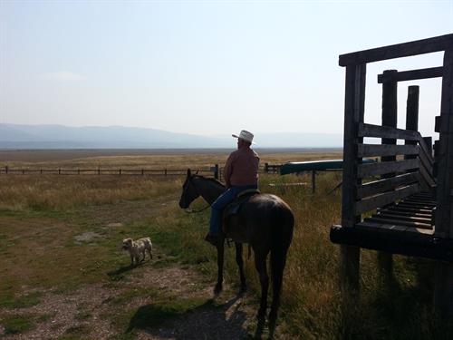 Flat Ranch Cattle Drive, Idaho