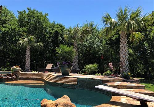 Palms Installed Around Pool