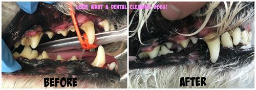 Gallery Image Before._After_Dental_Beans.jpg