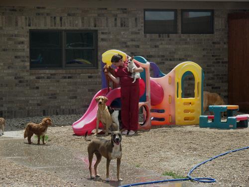 Dog Daycare at our Shamrock Pet Resort