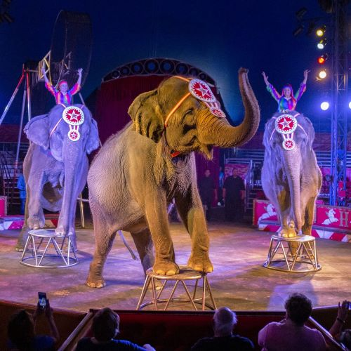 Make a connection with our three beautiful elephants - spectacular!