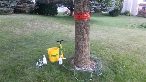 Tree health treatment