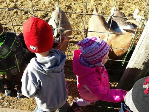 Field Trip to Pecks Farm Market