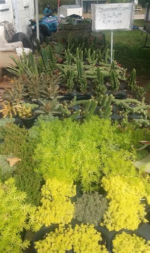 Succulents 3 for $10 or $4 each.