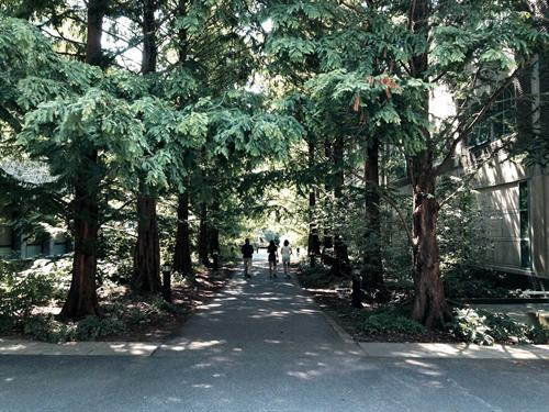 Visiting the tree lined campus of Swarthmore College