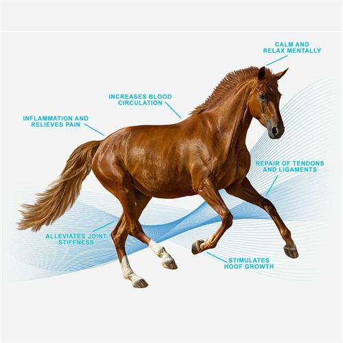 Gallery Image magna-wave-PEMF-machine-for-horses-relieves-pain-repair-of-tendons.jpg