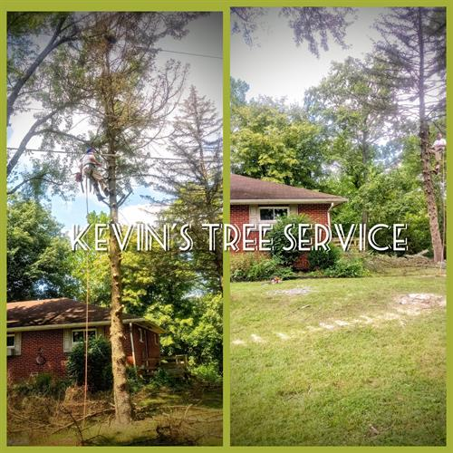 Before and after tree removal service