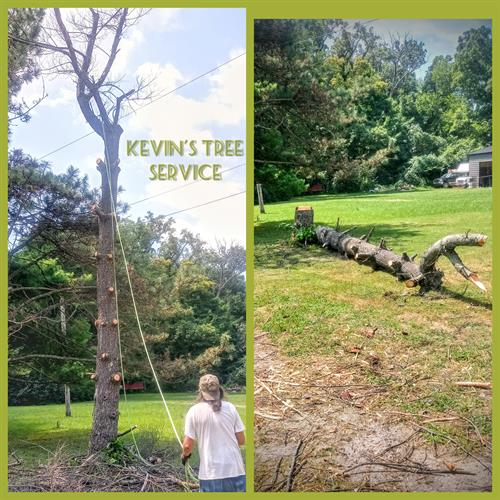 A tree removal on a residential property