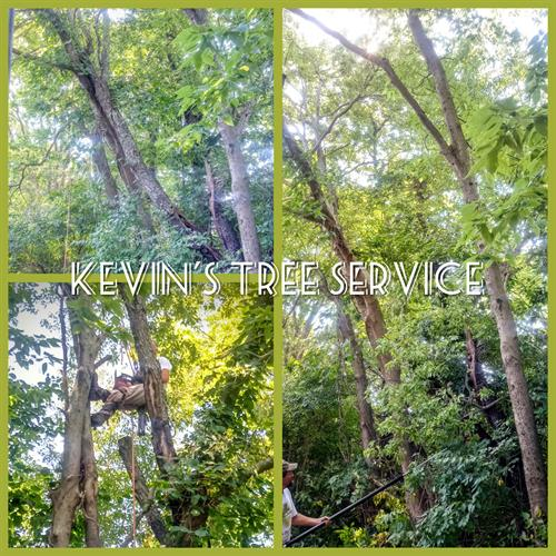 A before, during, and after shot of a tricky tree removal in an aparment complex!