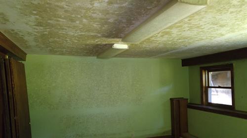 Mold in basemet