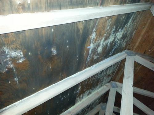 Mold in attic on sheathing