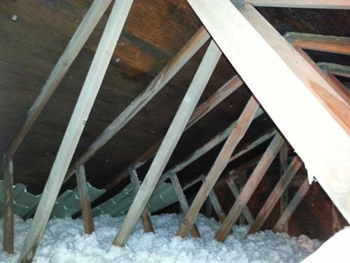 Mold in attic on sheathing and beams