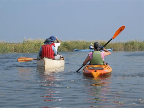 Gallery Image kayaking_in_marsh_mpoole.jpg
