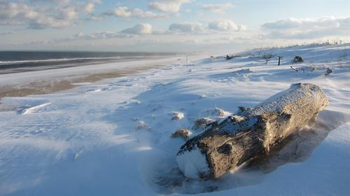 Gallery Image winter_beach_mpoole.jpg