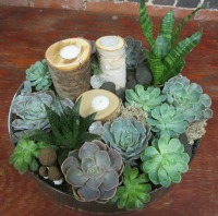Succulent garden bt Newburyport's premier flower shop Beach Plum Flower Shop