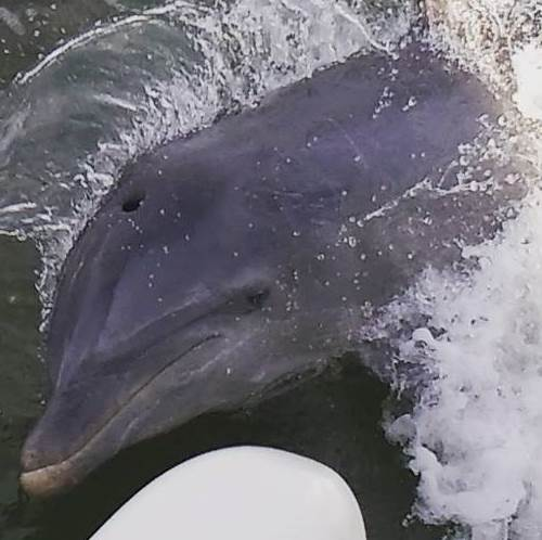 Fort Myers Beach Dolphin Tours