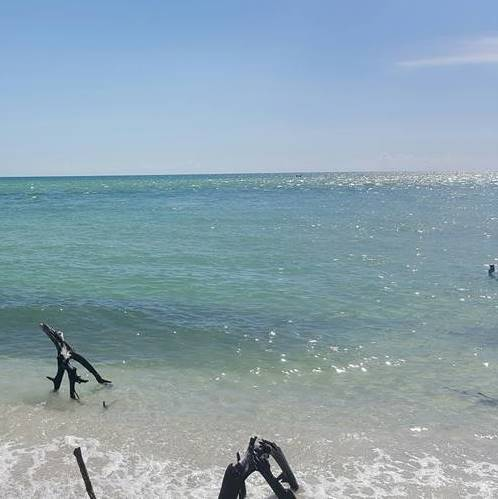 Fort Myers Beach Eco Tour