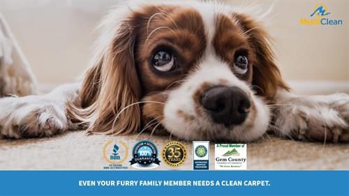 Carpet Cleaning From MultiClean