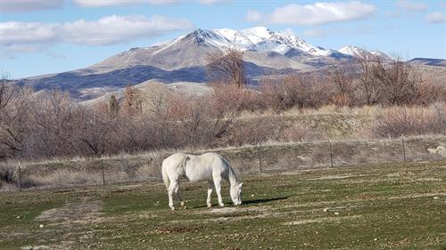 Brandi enjoying her pasture