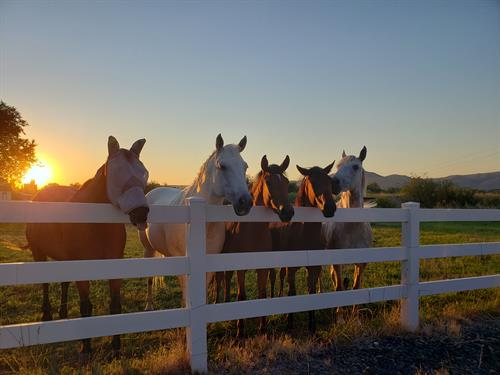 Gallery Image Tegan_and_Horses.jpg