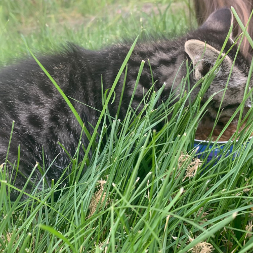 Gallery Image kittensgrass.jpg
