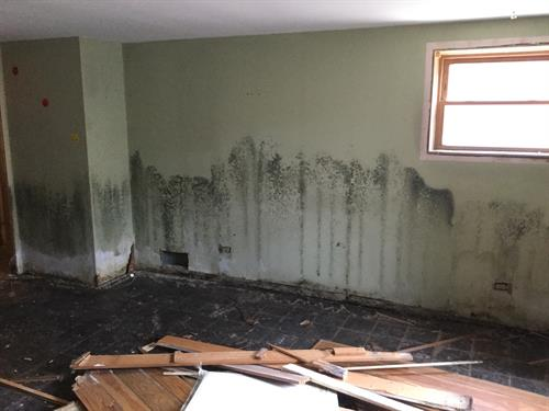 Mold! Mold! Mold! Call SERVPRO of Mount Prospect/North Des Plaines for any mold remediation to your home or business!