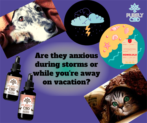 Gallery Image Are_they_anxious_during_storms_or_while_you're_on_vacation_(2).png