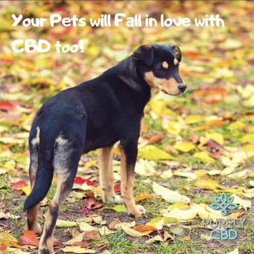 Gallery Image Your_pets_will_Fall_in_love_with_CBD_too.jpg