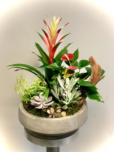 Gallery Image Mixed_Exotic_Garden.jpg