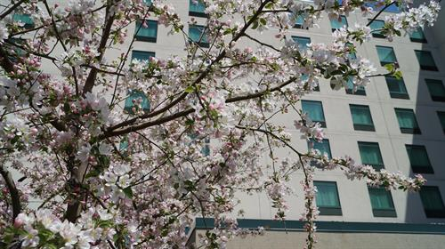 Spring time at the Clarion Suites!