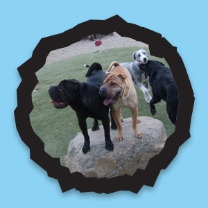 3 Daycare Play Parks include indoor & outdoor areas with paw friendly flooring & K9Grass...and lots of love and fun!