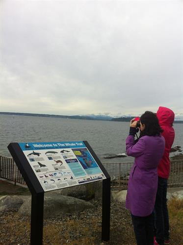 Watching Whales on The Whale Trail!