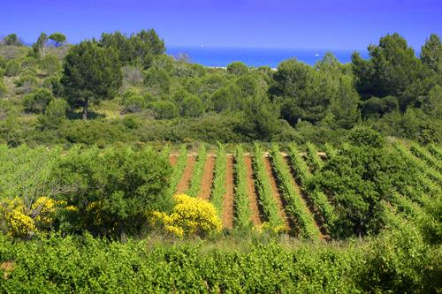 The Mediterranean Sea infleunces the wines