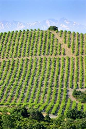 High altitude vineyards make great wine