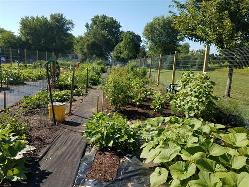 Three local community gardens bring us their fresh produce!