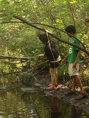 Exploring Turtle Pond, a shady pool with catfish, frogs, and painted turtles.